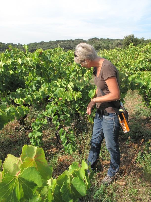 Côtes du Rhône néo vignerons 036