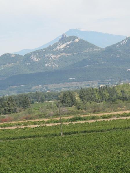 Côtes du Rhône néo vignerons 074