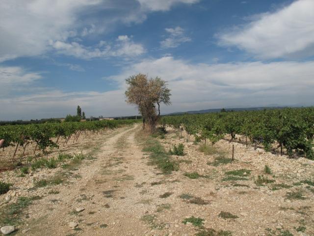 Côtes du Rhône néo vignerons 076