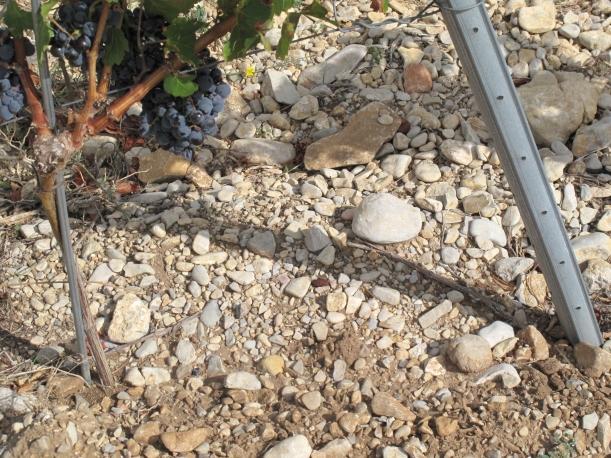 Côtes du Rhône néo vignerons 077