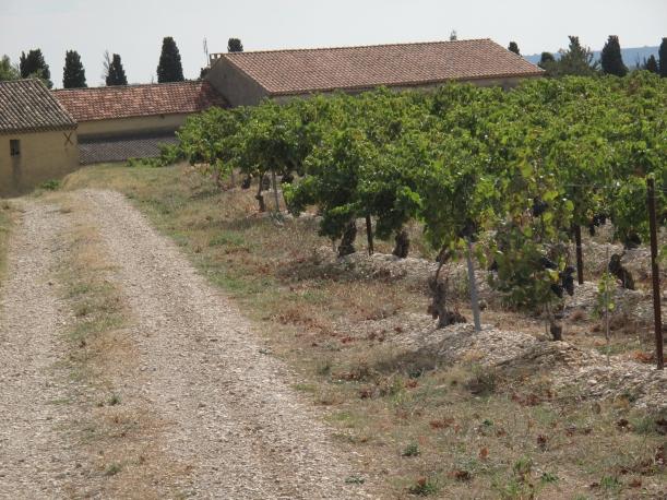Côtes du Rhône néo vignerons 078
