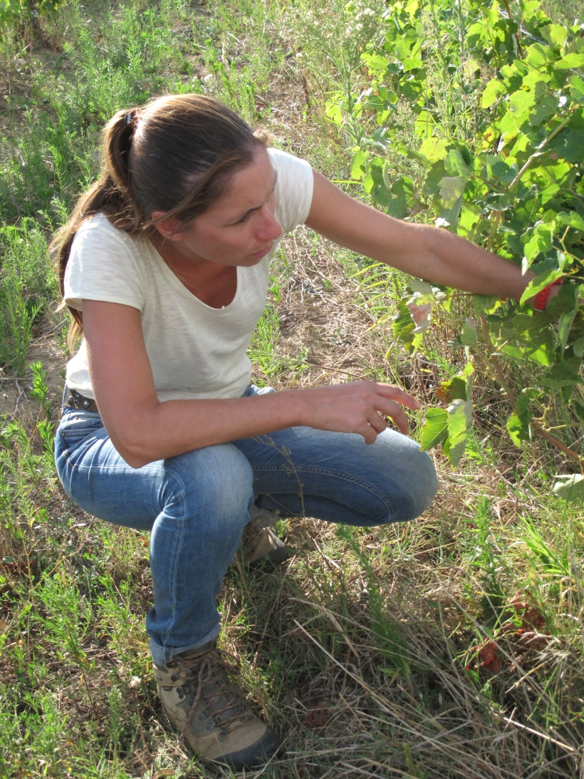 Côtes du Rhône néo vignerons 103