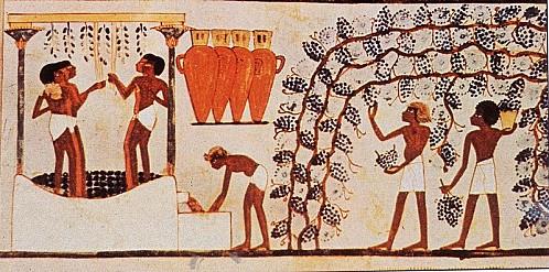 vignes_Egypte_