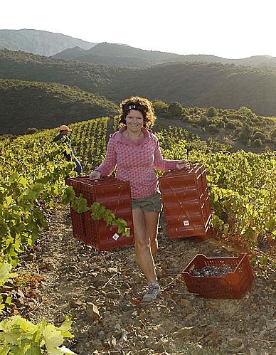 Katie dans ses vignes. Photo©DR