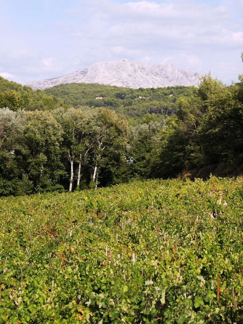 Chateau Simone le vignoble