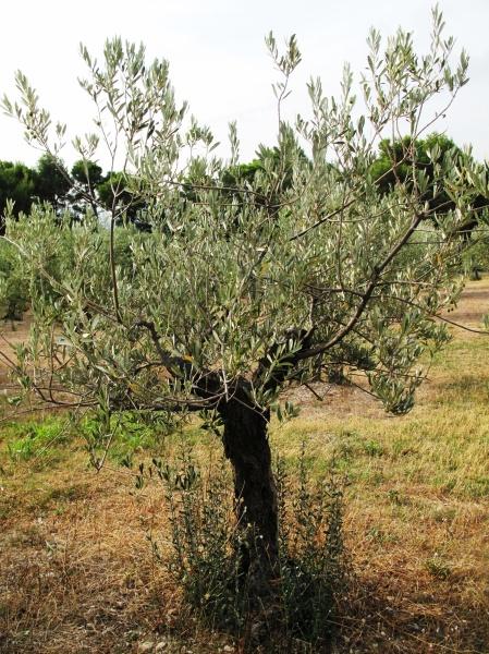 Côtes du Rhône néo vignerons 138