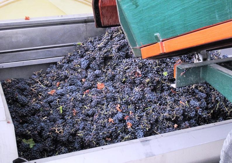 Côtes du Rhône néo vignerons 162