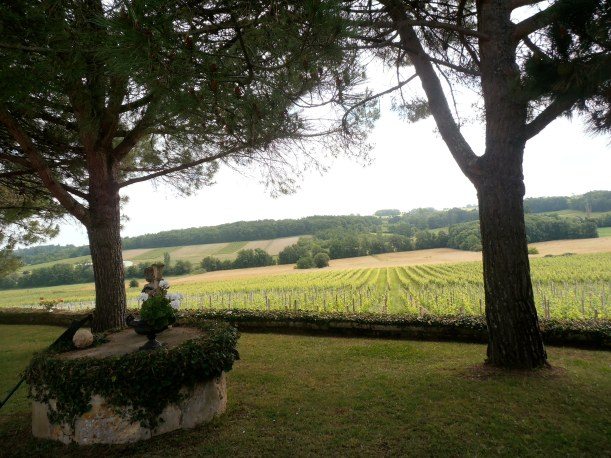 Le vignoble de Sainte-Foy-la-Grande, non loin de Castillon. Photo©MichelSmith