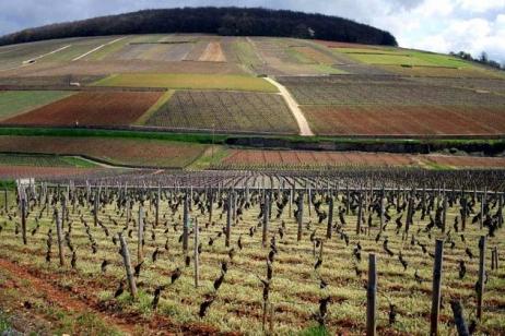 les-vignes-de-pommard-volnay-et-meursault-ont-ete-ravagees-par-la-grele-photo-d-illustration
