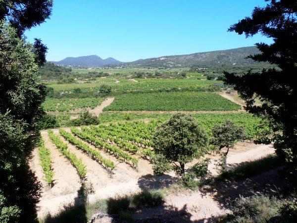 La vue sur les vignes du Mas des Quernes. Photo©MichelSmith