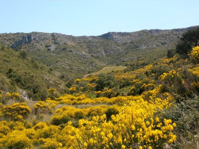 Tâche tendre au fond, dans le creux de la montagne... C'est la Loute ! Photo©MichelSmith