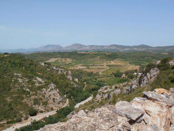 Au dessus du vignoble de Tautavel. Pour combien d temps la vigne?
