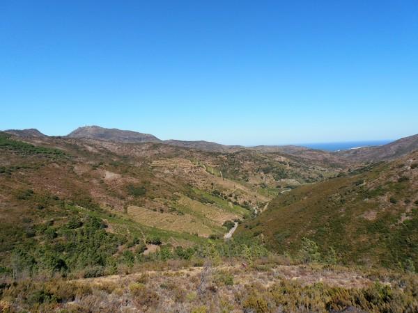 Le vignoble de Banyuls, face à la Méditerranée pour donner des vins uniques. Photo©MS