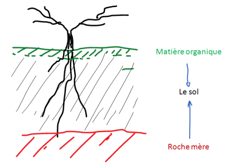 sol-et-organique-minéral