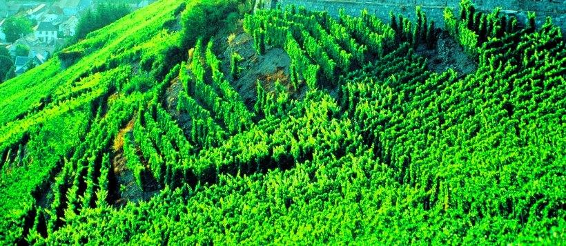 Copie (2) de Alsace vignoble 1