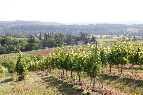 4. Le vignoble cadurcien, il y a de la place pour planter davantage. Photo Agnieszka Kumor