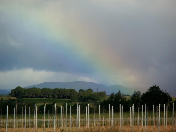 Nouvelles vignes sur échalas du côté de Saint-Chinian. Photo©MichelSmith