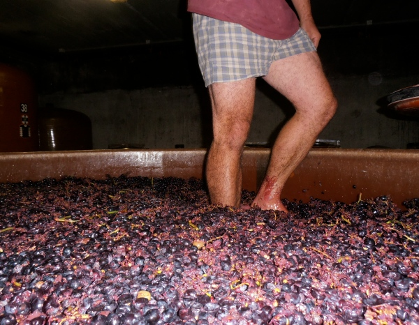Le vigneron sur son tapis Persan. Photo©MichelSmith