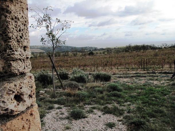 Languedoc octobre 2014 207