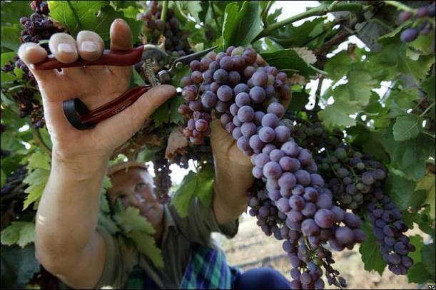 BULGARIA Harvest