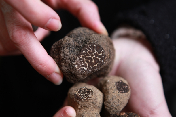 Different types of truffle