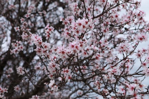 Early spring blossom @Sainte Croix