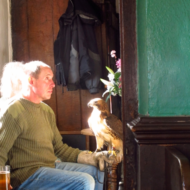Keeper, pint, red tailed hawk and over-exposed image of Geoff Fuller, mine host, with his head permanently and properly  buried in his copy of The Times