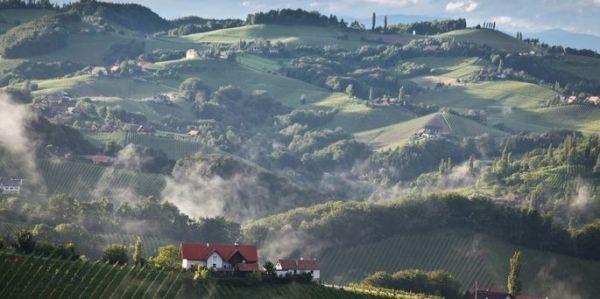 photo vineyards