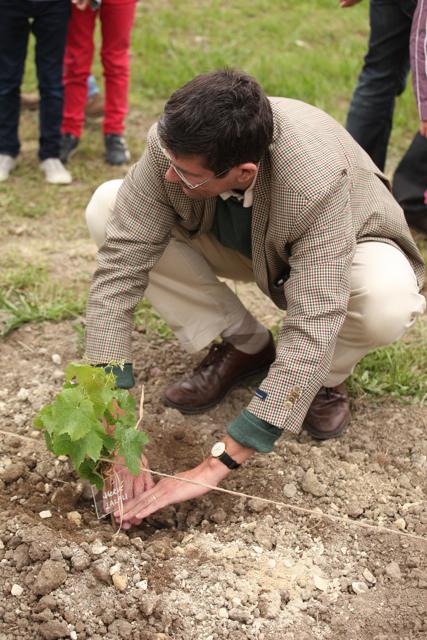 Hervé planting his vine.