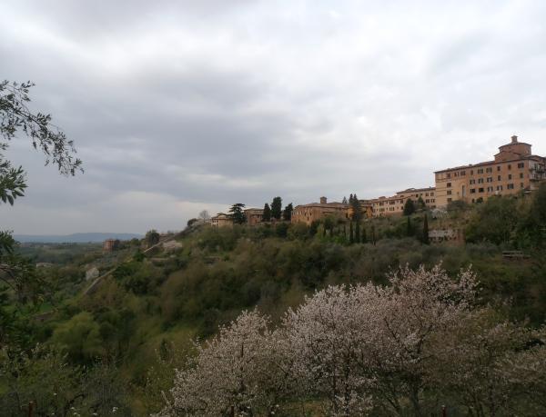 Siena, vue du Jardin botanique de l'Université. Photo©MichelSmith