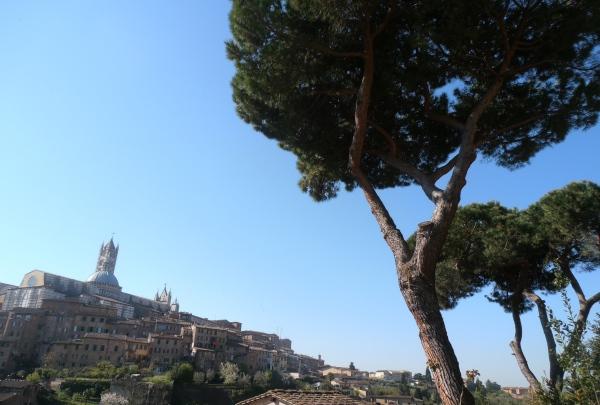 Surplombant Siena, la cathédrale, vue de San Domenico, dans le quartier de l'Oca. Photo©MichelSmith