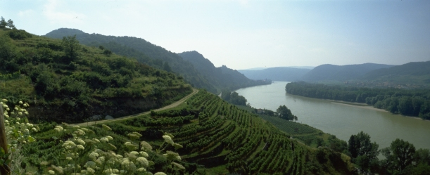 panorama_wachau_6__c__vinea
