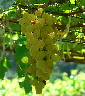 280px-Chenin_blanc_grapes