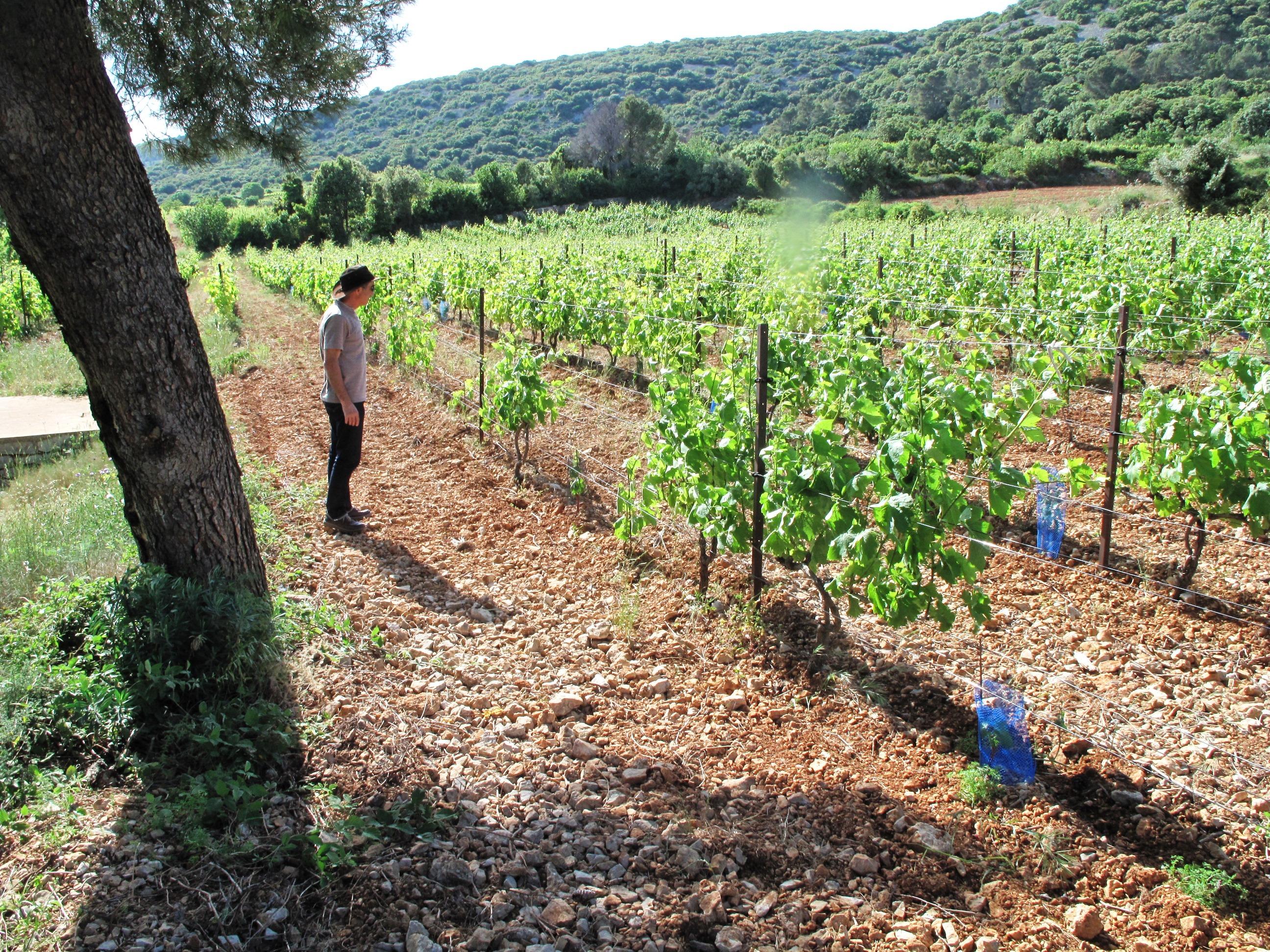 Chateau de Mons Bordeaux Vieilles vignes, elevage barriques