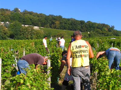 Picking in Sancerre September 2009