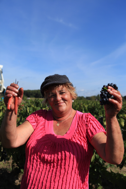 Gamay in Cheverny