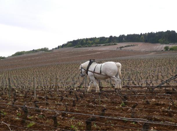 cheval CARTE NOEL