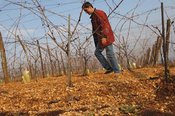 LE VIN AU FIL DE L EAU Elian Da Ros dans ses vignes à Cocumont