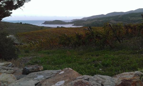 Paulilles, la baie et ses vignes vues d'en haut cet automne. Photo©MichelSmith