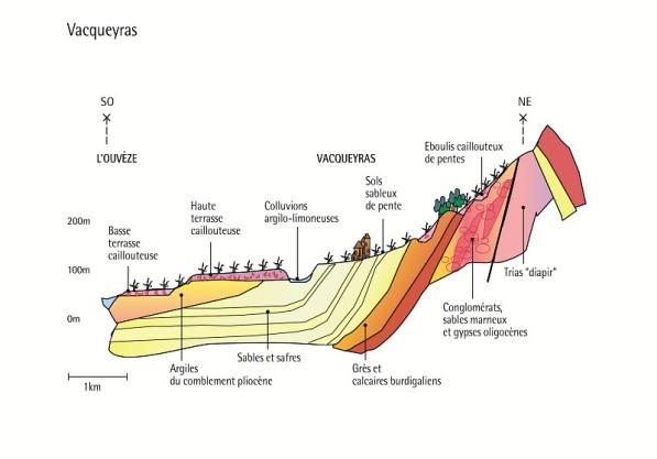 Coupe géologique (Vacqueyras) / Geological profile (Vacqueyras)
