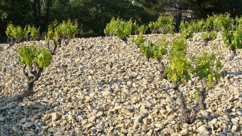 1cailloutis Miocène supérieur haut des collines