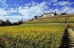 chateau-d-isenbourg-vineyard