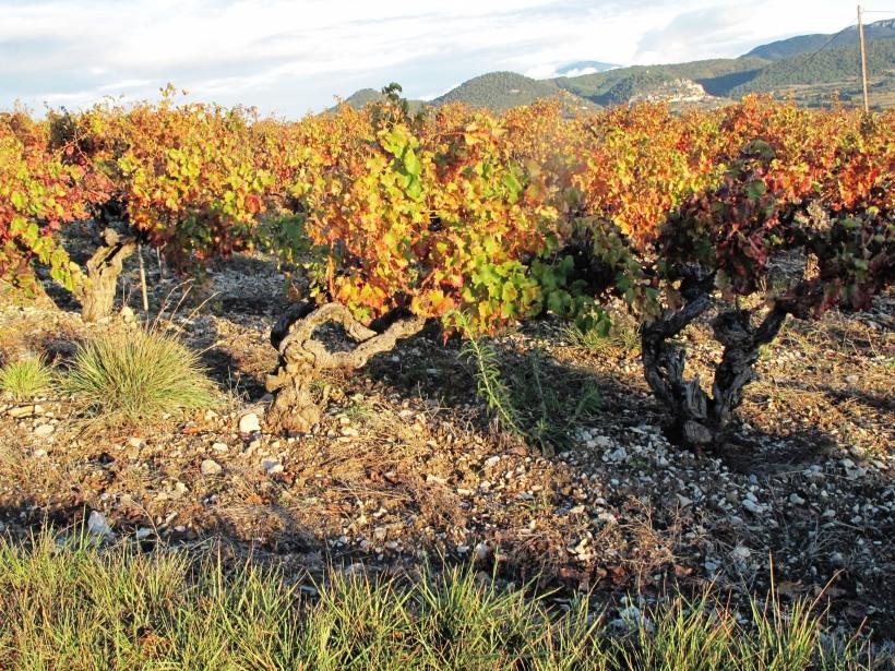 Rhône Rasteau sols 059