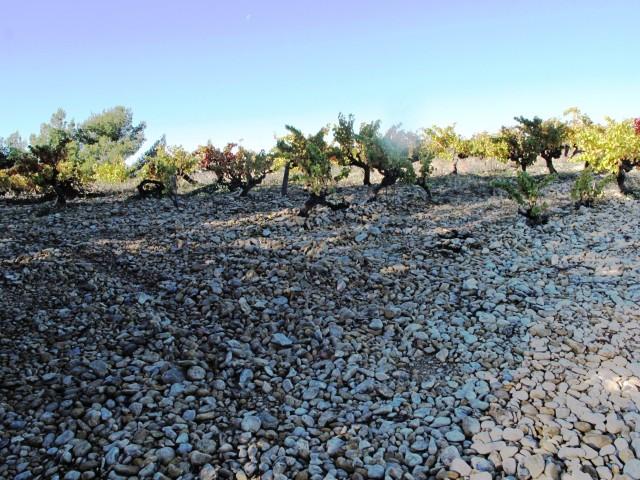 Rhône Rasteau sols 117