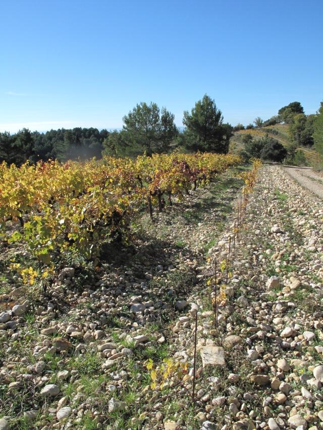 Rhône Rasteau sols 138