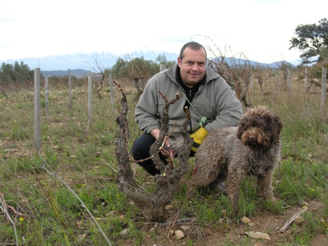 Gérard Gauby et ses Vieilles Vignes !