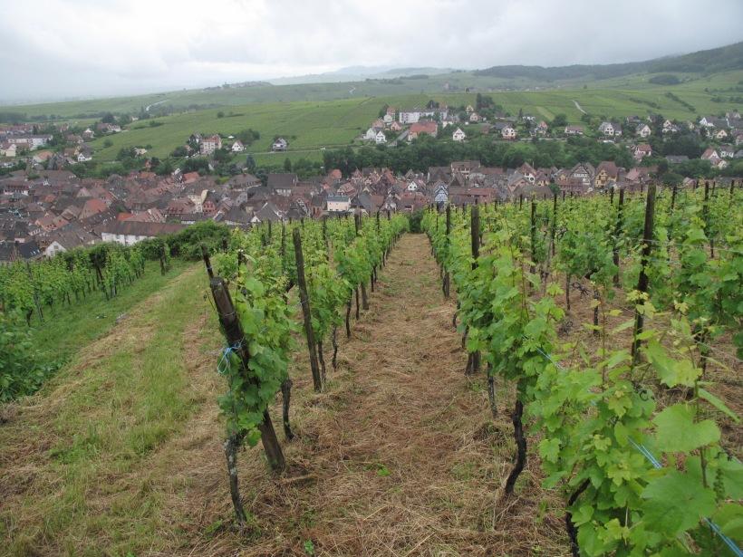 Alsace millésime 2016 168