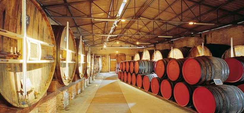 vinification-mutage-elevage-et-vieillissement-banyuls-1038x480