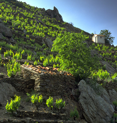 vins-banyuls-collioure-domaine-pic-joan-visites-cave-4