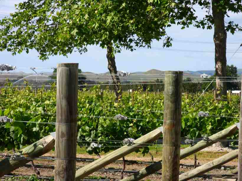 vineyardhawkes-bay
